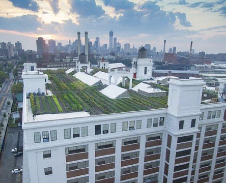 Le quattro stagioni degli orti sui tetti di New York