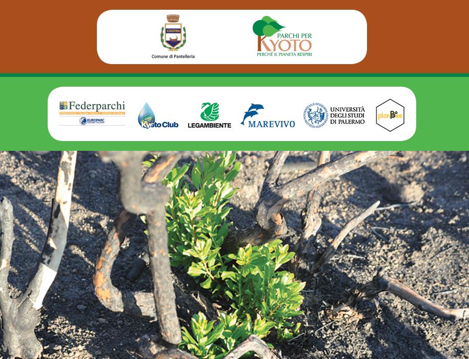 pantelleria-crowdfunding-alberi