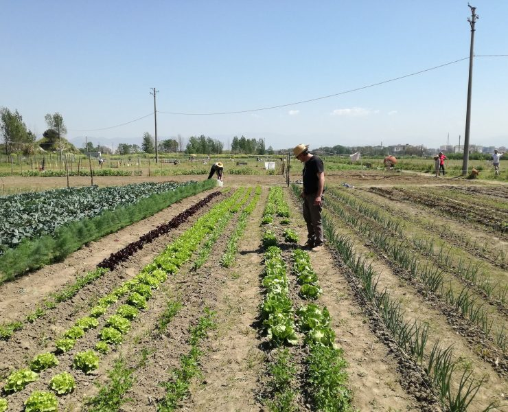 Sgorbati Group coltiva gli orti della legalità