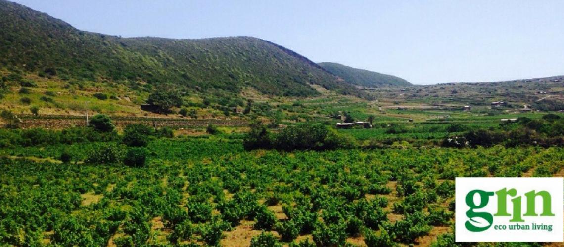 Pantelleria diventa più verde con Grin