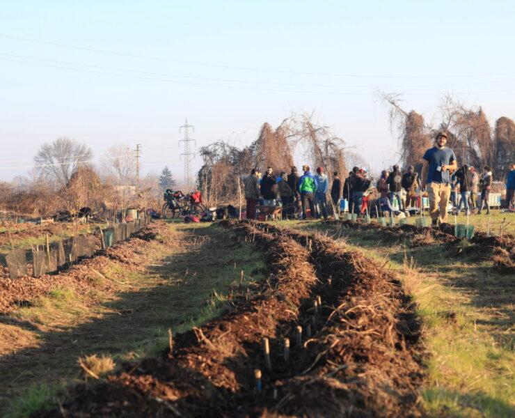 L'agroforesta di Cascinet per rigenerare terra e persone