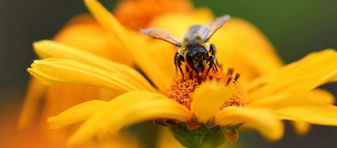 La biodiversità fiorisce, con OBI per le api